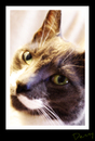 Cartoon: Hollie (small) by Krinisty tagged cat,posing,art,krinisty,photography,happy,kitty