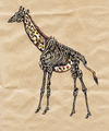 Cartoon: giraffe half dead (small) by Battlestar tagged giraffe tiere animals skelett natur illustration