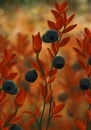 Cartoon: Blueberries (small) by alesza tagged blueberry,blaubeere,blueberries,autumn,herbst
