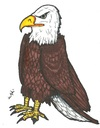 Cartoon: American Bald Eagle (small) by m-crackaz tagged american,great,bald,eagle,kaycee