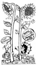 Cartoon: Sunflower Eaters (small) by Kestutis tagged sunflower,children,kinder,education,turtoise,hedgehog,kind,child,kids,comic,strip,kestutis,siaulytis,lithuania,adventure
