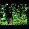 Cartoon: MH - Into the Woods (small) by MoArt Rotterdam tagged wood,bos,intothewoods,hetbosin,green,groen,tree,boom