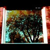Cartoon: MH - The Tree (small) by MoArt Rotterdam tagged rotterdam boom tree window reflection weerspiegeling