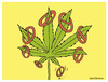 Cartoon: Release of marijuana (small) by martirena tagged marijuana,countries,release