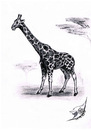 Cartoon: Giraffa camelopardalis (small) by swenson tagged giraffe,tier,animal,africa,afrika,animals,tiere