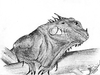 Cartoon: Iguana iguana rhinolopha (small) by swenson tagged animal,animals,tier,reptile,reptilien,echse,iguana,leguan