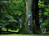 Cartoon: FOREST LOVE 2 (small) by T-BOY tagged forest,love