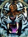 Cartoon: Halloween (small) by yamo3asamo tagged hungry,monster,halloween,tiger,teeth