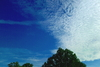 Cartoon: Natur (small) by lesemaus tagged himmel,baum
