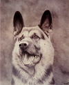 Cartoon: Dog (small) by Gocha Dzaganashvili tagged dog,animal,painting,draw,art,gocha,dzaganashvili