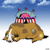 Cartoon: Cirque Du Flea (small) by toons tagged dogs,circus,flea,cirque,do,solei,fleas