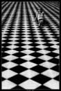 Cartoon: Game of Life (small) by BenHeine tagged game,of,life,thomas,moore,poem,in,the,morning,chess,echecs,jeux,black,and,white,marta,smile,unknown,paris,versailles,happiness,mystery,past,perspective,pleasure,woman,faith,sorrow,love,amour,tender,freshness,ben,heine,hubert,lebizay,square,carre,geometry