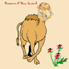 Cartoon: Flowers of the desert (small) by azamponi tagged jordan samir alramahi cartoonist humor politics