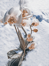 Cartoon: not from this world (small) by Peter Losch tagged winter,wetter,frühling,jahreszeiten,phantom,illusion