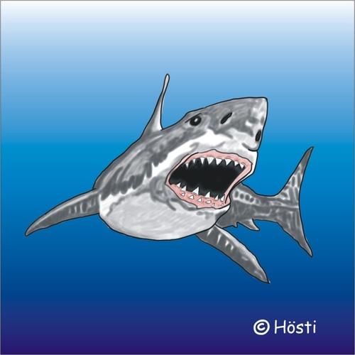 shark übersetzung